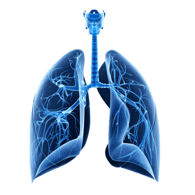 Repiratory System