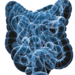 Comparison of the effects of clonidine, loperamide and metoclopramide in two models of gastric emptying in the rat