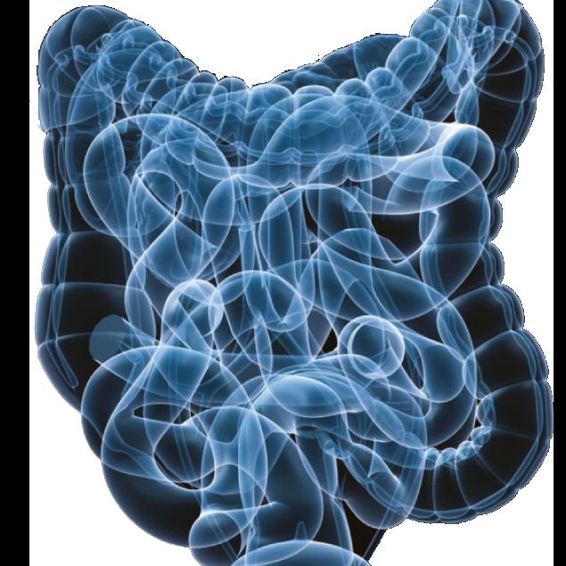 gastro-intestinal system